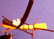 Chernobyl Ant Chernobyl-ant-fly-17