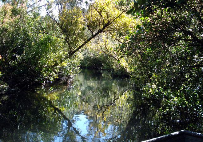 Pescando en Los Everglades del río Maullín